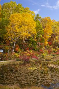 志賀高原 蓮池の紅葉の写真素材 [FYI04807507]