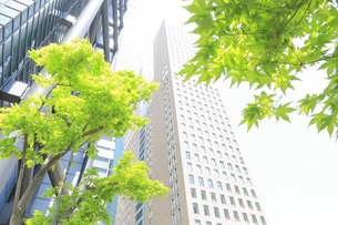 汐留シオサイトの新緑と高層マンションの写真素材 [FYI04807572]