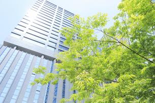 汐留シオサイトの新緑と高層マンションの写真素材 [FYI04807603]