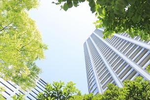 汐留シオサイトの新緑と高層マンションの写真素材 [FYI04807605]