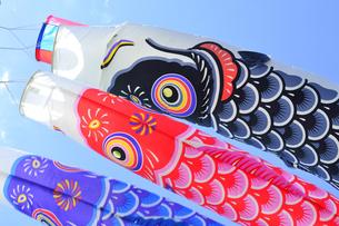 五月の鯉のぼりの写真素材 [FYI04807637]