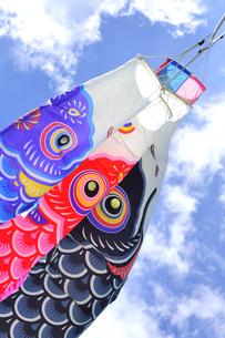 五月の鯉のぼりの写真素材 [FYI04807638]