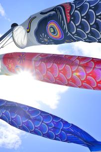 五月の鯉のぼりの写真素材 [FYI04807644]