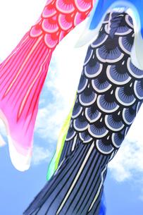 五月の鯉のぼりの写真素材 [FYI04807645]
