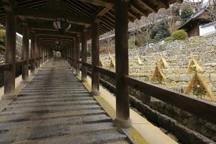 長谷寺登廊と冬牡丹 奈良県の写真素材 [FYI04807653]