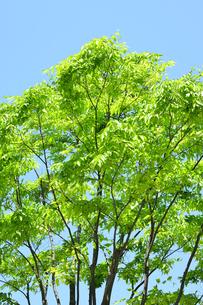青空と新緑の写真素材 [FYI04807685]