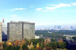 帝国ホテルから見た高層ビルと紅葉の木々が並ぶ千代田区界隈の景観の写真素材 [FYI04807912]