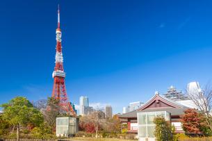 秋の芝公園から望む東京タワーの写真素材 [FYI04808014]