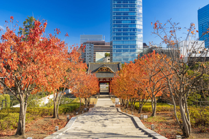 秋の芝公園から望む東京タワーの写真素材 [FYI04808015]