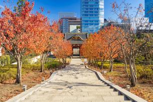 秋の芝公園から望む東京タワーの写真素材 [FYI04808016]