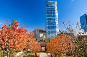 秋の芝公園から望む東京タワーの写真素材 [FYI04808017]