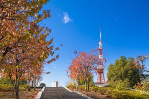 秋の芝公園から望む東京タワーの写真素材 [FYI04808018]