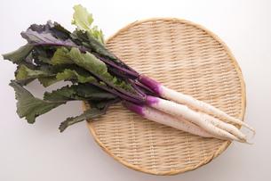 日野菜かぶの写真素材 [FYI04808066]