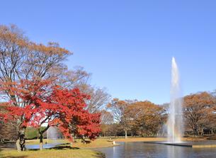 紅葉の代々木公園の写真素材 [FYI04808273]