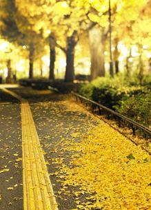 イチョウ並木の歩道と落ち葉の写真素材 [FYI04808276]