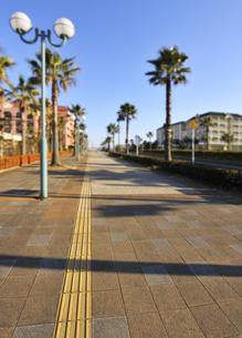 レンガ造の歩道とパームツリーの並木道の写真素材 [FYI04808287]