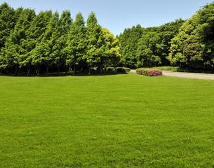 水元公園の草原と森の写真素材 [FYI04808289]