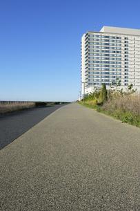 早朝の日の出海岸沿い緑道の写真素材 [FYI04808302]