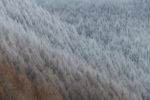 冬のグラデーションの写真素材 [FYI04808462]