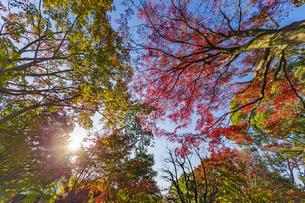 名古屋城二之丸庭園を美しく染める紅葉の写真素材 [FYI04808538]