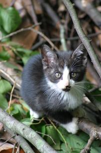 公園の猫の写真素材 [FYI04809085]