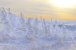 山形蔵王 樹氷の写真素材 [FYI04809494]