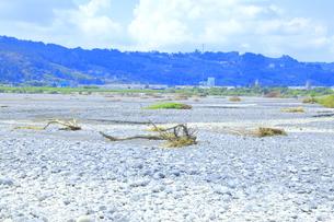 夏の渇水期の大井川 の写真素材 [FYI04809757]