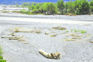 夏の渇水期の大井川の写真素材 [FYI04809779]