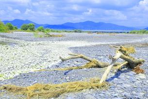 夏の渇水期の大井川 の写真素材 [FYI04809804]