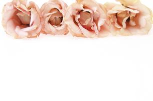 トルコキキョウの花束の写真素材 [FYI04809889]