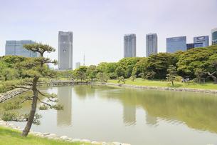 浜離宮庭園と汐留タワーマンションの写真素材 [FYI04810251]
