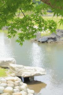 浜離宮庭園の池の紅葉の写真素材 [FYI04810258]