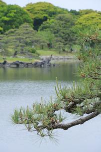 浜離宮庭園の池と松の写真素材 [FYI04810259]