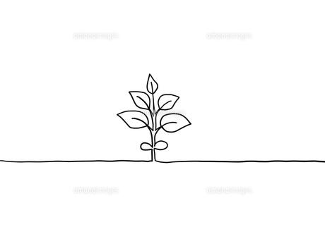 植物の手描き線画イラストのイラスト素材 [FYI04810271]