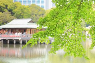 浜離宮庭園の中島の御茶屋ともみじの写真素材 [FYI04810304]
