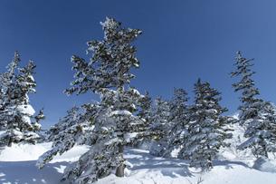 北海道 十勝岳連峰の冬の風景の写真素材 [FYI04810471]