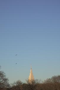 代々木公園から望む代々木ドコモタワービルの写真素材 [FYI04810498]