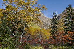 焼岳中の湯ルートから紅葉の風景の写真素材 [FYI04810528]