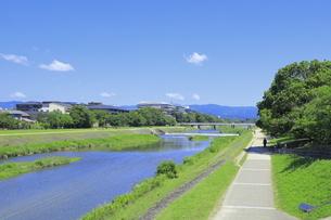 夏の嵯峨の竹林の写真素材 [FYI04810757]
