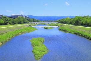 初夏の鴨川の写真素材 [FYI04810795]
