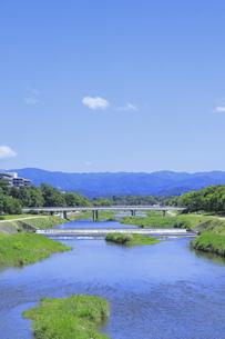 初夏の鴨川の写真素材 [FYI04810797]