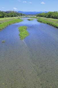 初夏の鴨川の写真素材 [FYI04810798]
