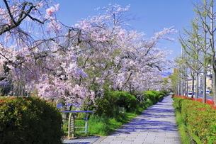 京都の花の回廊の写真素材 [FYI04810817]