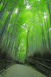 夏の嵯峨の竹林の写真素材 [FYI04810879]