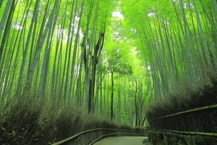 夏の嵯峨の竹林の写真素材 [FYI04810880]