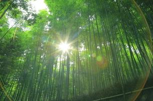 夏の嵯峨の竹林の写真素材 [FYI04810883]