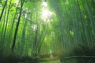 夏の嵯峨の竹林の写真素材 [FYI04810884]