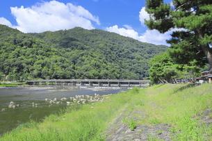 夏の嵐山と渡月橋の写真素材 [FYI04810885]