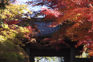 鎌倉の寺の紅葉の写真素材 [FYI04811071]