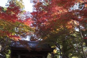 鎌倉の寺の紅葉の写真素材 [FYI04811072]